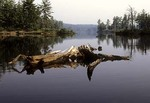 Driftwood in Tully Lake