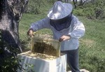 Beekeeper Tending His Hives