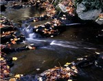 Stream Running Through the Woods in Fall