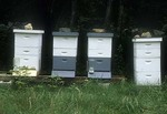 Four Bee Hives