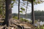 Tully Lake Through the Trees