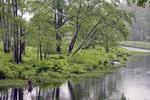 Rainy Day Tully River