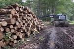 Cut Logs #2