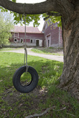 Tire Swing and Old Barn
