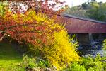 Springtime at West Cornwall Covered Bridge