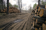 Logs Stacked Ready for the Lumber Mill