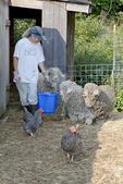 Farmer Feeding Her Angora Goats