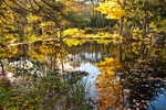 Mill Pond in Autumn