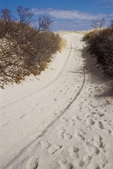 Dune Buggy Tracks in the Sand