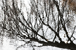Reflections of Trees in the Ashuelot River #1