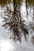 Reflections of Trees in the Ashuelot River #2
