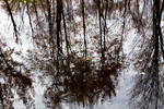 Reflections of Trees in the Ashuelot River #3