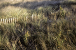 Fence Through The Beach Grass