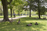 Geese and People Use The Park