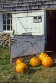 Pumpkins By the Barn Door