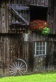 Old Barn with Red Impatiens in Arlington, Vermont