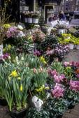 Flowers on the Sidewalk in Harvard Square