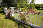 White Fence with Roses in the Country