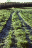 Tractor tire tracks in the meadow grass