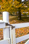 Gate with fall foliage in the background