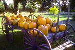 Pumpkins for sale at a New England farm stand