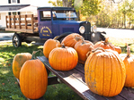 Pumpkins ready for sale at a New England farm stand
