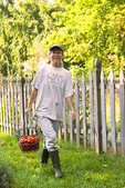 Gardener carries tomatoes from the garden