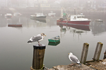 Two seagulls appear to be chatting on a foggy day at Rockport, MA