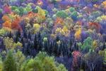 Fall colors on a hillside