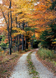 An old country dirt road in the fall