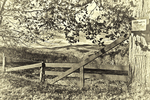 An old fence in Vermont in black and white toned