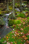 Mossy Brook flows near a trail to Mt. Monadnock. #2