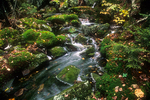 Mossy Brook flows near a trail to Mt. Monadnock.#4