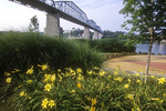 Walnut Street Bridge is high above the Tennessee River Park in Chattanooga, Tennessee