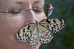 Rice Paper butterfly on a woman's nose