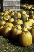 Pumpkins for sale at a farm stand
