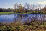 A small pond with cattails