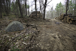 Logging operation in Massachusetts