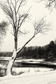 Tree leans over a snow covered pond
