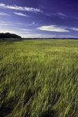 Salt marsh in Wellfleet, MA