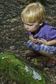 Little boy looking at red eft on a moss covered rock