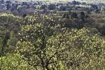 View from Lookout Rock in Uxbridge, MA