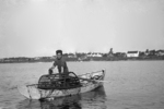 Lobsterman hauling his trap in Casco Bay, Maine early 1900's