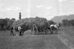 Four men raking a hay field and loading the hay wagon which is pulled by horses.