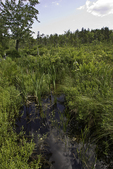 Hawley Bog