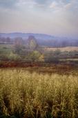 Cornfield in the fall