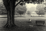 Petersham Town Common in black and white