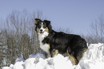An Aussie at the top of the snow pile
