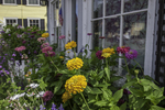 Flowers growing along the main street in Rockport, MA