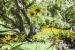 Flowers reach for the sky in Prescott Park